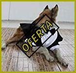 Disfraces de halloween para perros pitbull
