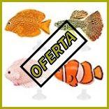 Peceras con peces