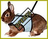 Arneses para conejos